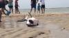 Salvat în ultimul moment! Un grup de conservatoriști a readus la viață un rechin naufragiat (VIDEO)