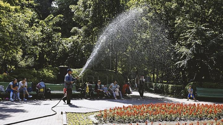 DE NECREZUT: Poliţiştii au reţinut un tânăr care uda nişte plante lângă un parc din Chişinău