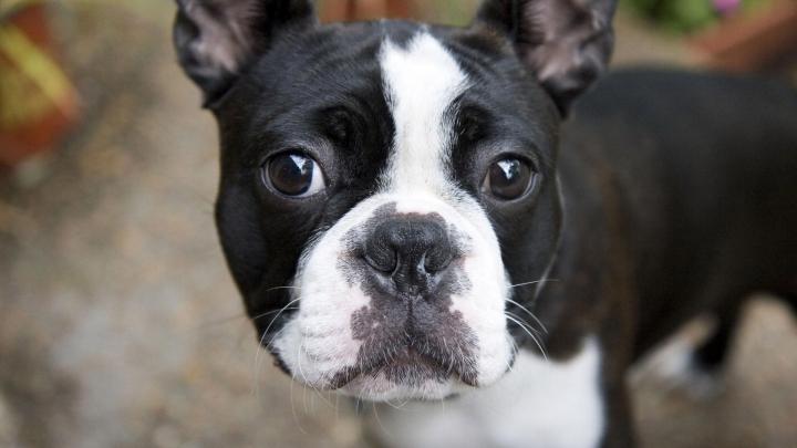 VIRAL pe Internet. Un câine îşi trădează cel mai bun prieten (VIDEO)