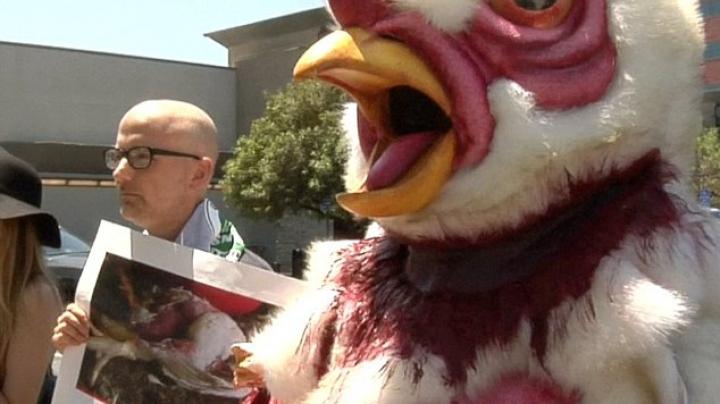 Veganii ies la proteste în Los Angeles. Demonstranţii vor să le îmbunătăţească viaţa găinilor