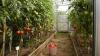 Cresc legume şi fac experimente cu ele. Cum poţi deveni un cultivator iscusit la o şcoală din Nisporeni
