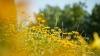 METEO 7 august 2015: Soarele arzător domină întreaga ţară! Câte grade vom avea în termometre
