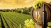 Veste bună pentru producătorii de vinuri. BEI le acordă împrumuturi cu dobândă mică