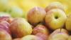 JOS EMBARGOUL! Rusia lasă undă verde importului unor fructe moldoveneşti
