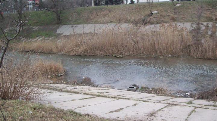 DEZASTRU pe râul Bâc. Ce au constat ecologiştii şi care e pericolul ce îi paşte pe oameni