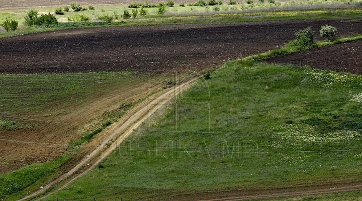 La capătul puterilor. Unii fermieri cer STARE DE URGENŢĂ în agricultură
