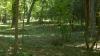 E REVOLTĂTOR şi JALNIC ce se întâmplă în pădurile din Moldova. Arendaşii se declară nevinovaţi (VIDEO)