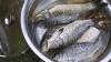 SECRETELE pescuitului industrial. Autorităţile ar putea interzice prinsul peştelui din Nistru şi Prut