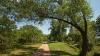 O familie a găsit o comoară de milioane de dolari. Ce se afla în apropierea unui copac bătrân (FOTO)