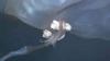Extraterestru dintr-o altă lume? CREATURA ÎNSPĂIMÂNTĂTOARE care te lasă fără glas (VIDEO)