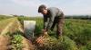România, Italia și Grecia au unii dintre cei mai bătrâni fermieri din UE