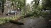 Furtuna a făcut PRĂPĂD în nordul ţării: Copaci doborâţi, acoperişuri deteriorate şi case fără curent