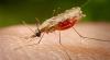 Ziua mondială de combatere a malariei
