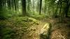 În timp ce mergea prin pădure, un bărbat a avut parte de o experienţă pe care n-o va uita toată viaţa!