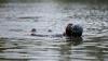 TRAGEDIE! Un adolescent s-a înecat în lacul de lângă Porţile Oraşului