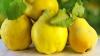 #Life Style: Gutuile, fructele toamnei pline de nutrienţi. Beneficiile nebănuite asupra sănătăţii