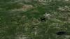 PUBLIKA ONLINE: Dronele care pot planta un miliard de copaci anual (VIDEO)