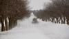 Experți: Semnul ciudat care arată că vom avea cea mai grea iarnă din ultimii 50 de ani