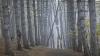 METEO 11 octombrie 2015. Ploile şi ceaţa au învăluit Moldova