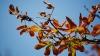VINE FRIGUL! Meteorologii anunţă temperaturi în scădere şi ploi