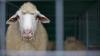Oile nu se hrănesc cu promisiuni! Fermierii riscă să-şi piardă afacerile din cauza indiferenţei autorităţilor