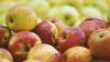 Depozitele de fructe, în atenţia Moscovei. O echipă de experţi ruşi va vizita Moldova în scurt timp