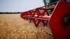 PRODUCŢIA AGRICOLĂ, ÎN CREŞTERE. În 2017, recolta de grâu constituie 1,17 milioane tone
