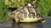 Caz extrem de rar. O broască ţestoasă este atinsă de albinism (FOTO)