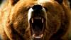 MOMENTE DE GROAZĂ! O pensionară din Rusia, atacată de o un urs. CINE A SALVAT-O