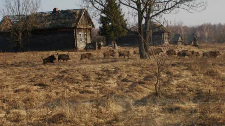 ULUITOR! Cum arată animalele sălbatice, supravieţuitoare ale catastrofei de la Cernobîl (FOTO)