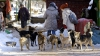 Câini cu microcipuri. În curând vor apărea şi la Chişinău, dacă va fi de acord Consiliul Municipal