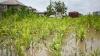Ameninţaţi de inundaţii nistrene. Autorităţile privesc neputincioase