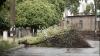 Consecinţele vântului puternic în Capitală: Circa 15 copaci doborâţi şi mai multe crengi rupte (FOTO)