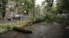 Zeci de sate, fără curent electric din cauza vântului puternic! Rafalele au doborât un copac în Chişinău