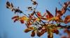 METEO 12 noiembrie. Temperaturi de primăvară în ultima lună de toamnă