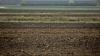 """Un consilier local din suburbia Capitalei nu a declarat """"din neatenție"""" 88 de terenuri agricole"""