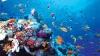 Apariţia vieţii în mediul acvatic. Teoria neaşteptată a cercetetărilor britanici