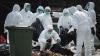 FOCAR de gripă aviară în Franța. Autoritățile au aplicat măsuri sanitare stricte