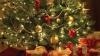 Are mii de globuleţe şi circa 20 de metri. Bradul de Crăciun care a intrat în Cartea Recordurilor (VIDEO)