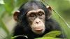 Număr de magie în fața unei maimuțe. Reacția de milioane a primatei (VIDEO)