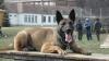 Un câine pe nume Omu a detectat 50.000 de ţigarete ascunse într-un autocar sosit din R. Moldova (FOTO)