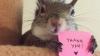 VIRAL! Cum arată noua vedetă a Internetului, veveriţa Jill (FOTO)