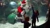 Spectacol în apă! Un Moş Crăciun a făcut senzaţie, dansând alături de mii de sardine (VIDEO)