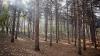 Pădurile sunt furate la greu în Moldova! Numărul defrișărilor ilegale S-A TRIPLAT