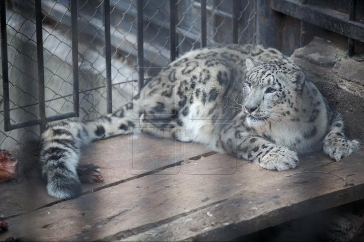 MINUNĂŢIE la Grădina Zoologică din Chişinău. Cum sunt îngrijite animalele pe timp de iarnă (FOTO)