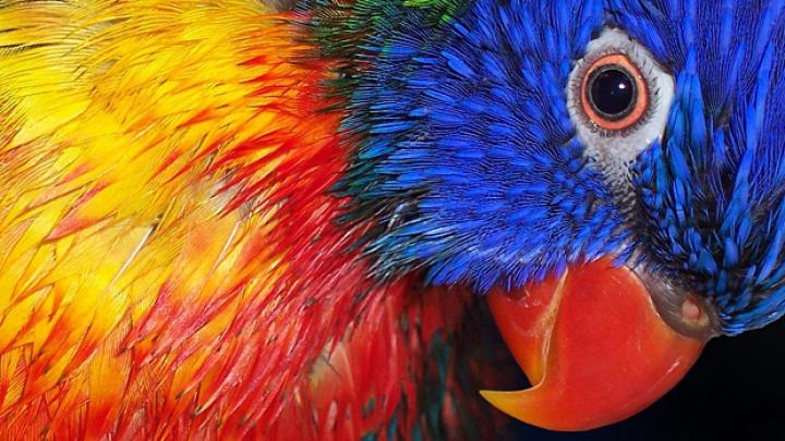 Un papagal a adoptat un ou din supermarket. Află ce s-a întâmplat mai departe (VIDEO)