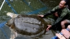 Durere în Vietnam. Un animal care ar fi avut peste 700 de ani a murit (VIDEO)