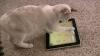 Şi animalele de companie trec la Internet. Pentru început, doar în Marea Britanie