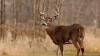 SURPRIZA pe care au avut-o doi vânători în momentul în care au încercat să vâneze un cerb (VIDEO)