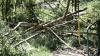 STOP exportului de lemn. Ministerul Mediului, pornit să pună capăt tăierilor ilegale de arbori